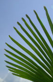 March 29th - Palm Sunday (Isa 50:4–7; Ps 21; Phil 2:6–11; Mk 14:1 - 15, 47)